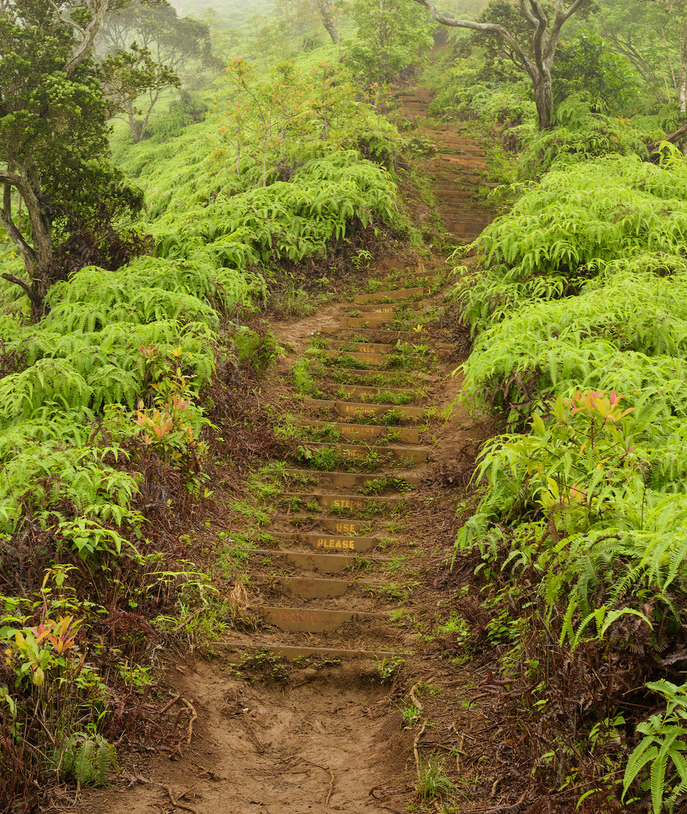 BTP_Kuliouou_Ridge_Trail-105.jpg