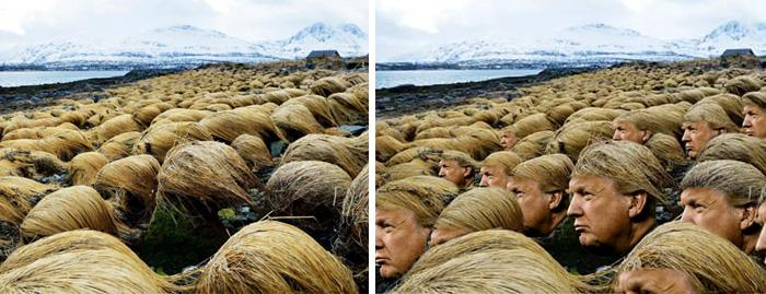 Hair Field