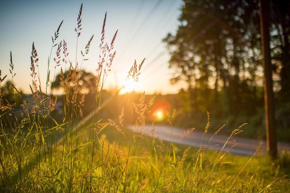 Landscapes_11.jpg