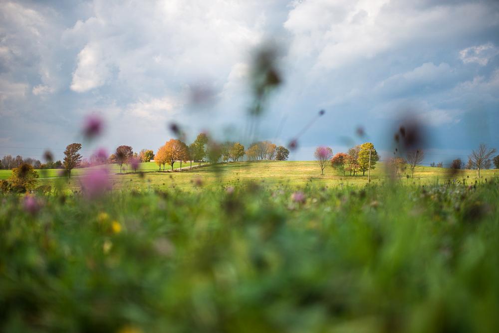 Landscapes_14.jpg