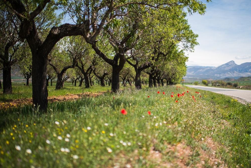 Landscapes_21.jpg