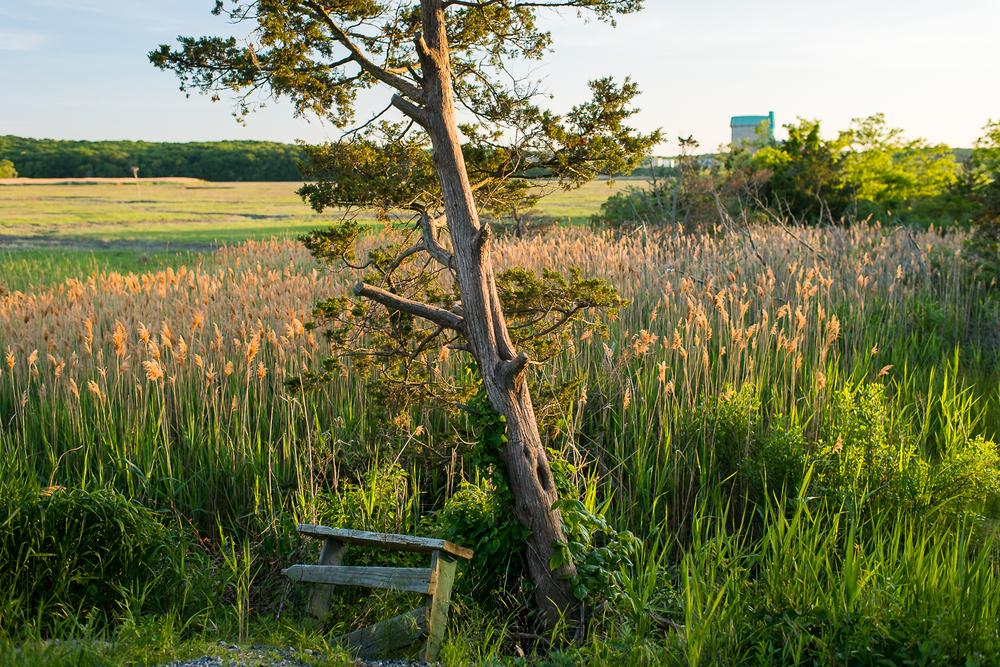 Landscapes_43.jpg