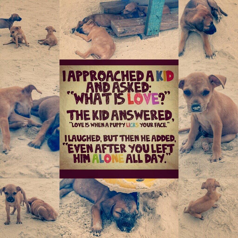 Beach Pups2-01.jpg