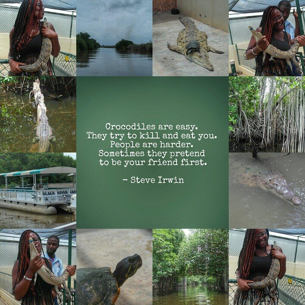 Crocodiles-01.jpg