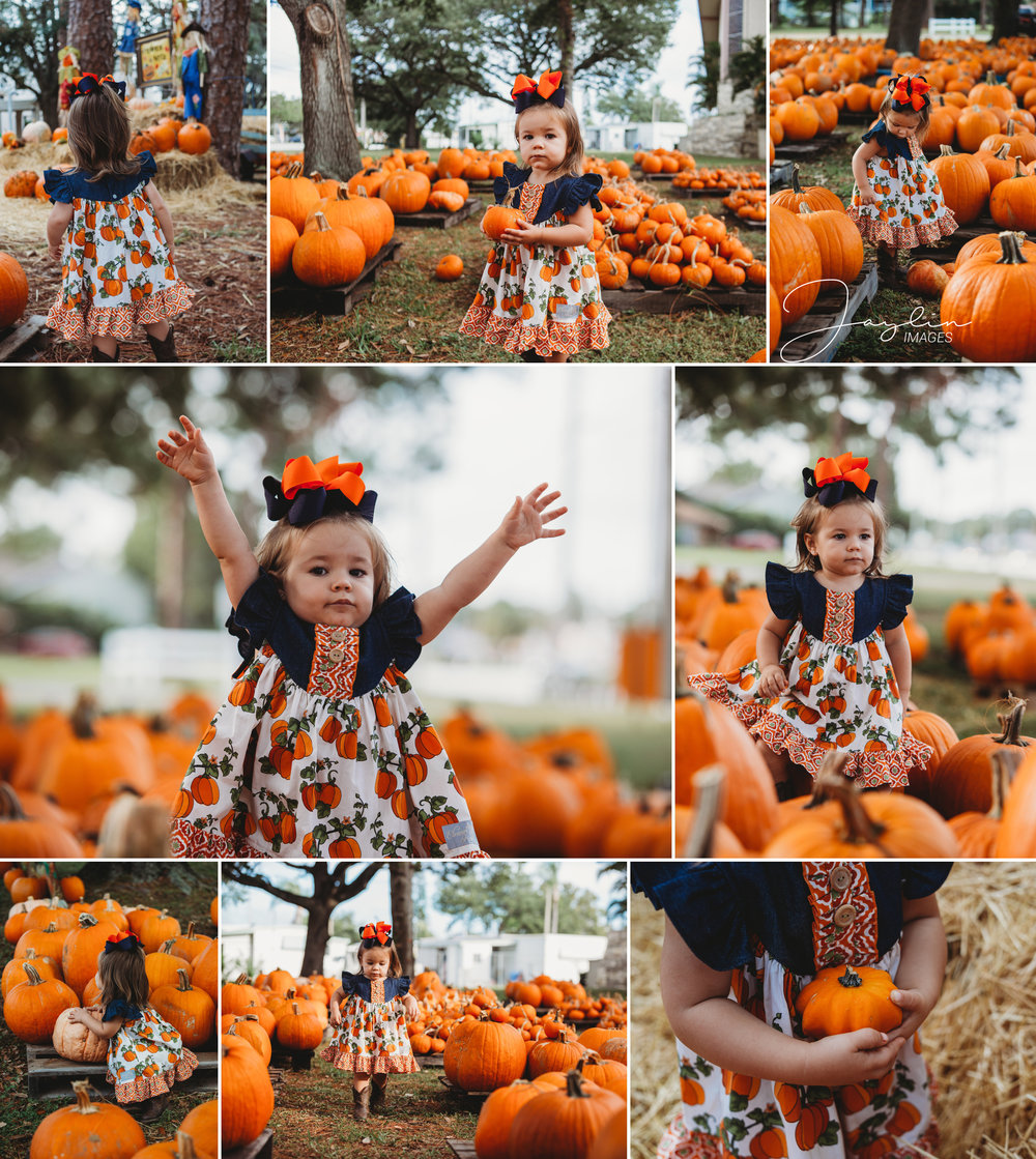 Pumpkin Patch Tampa Bay Jaylin Images
