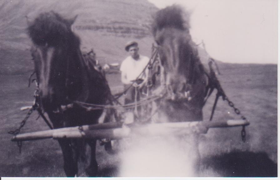 Mundi working with his horses