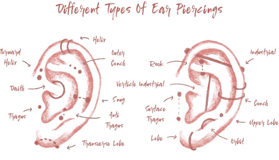 Ear-Piercing-Diagram[78595].jpg