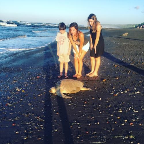 Turtles Laying eggs at Playa Ostional