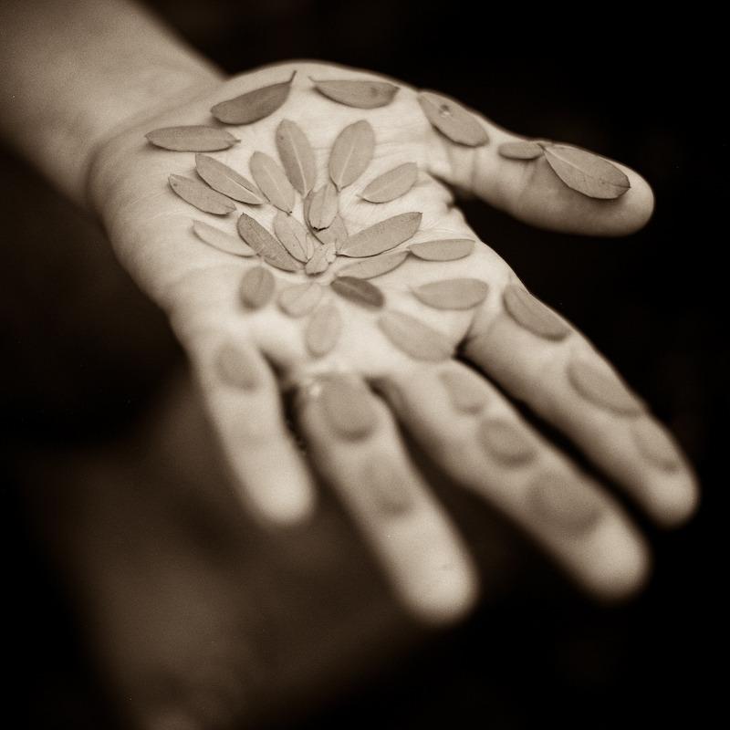 rebecca's palm