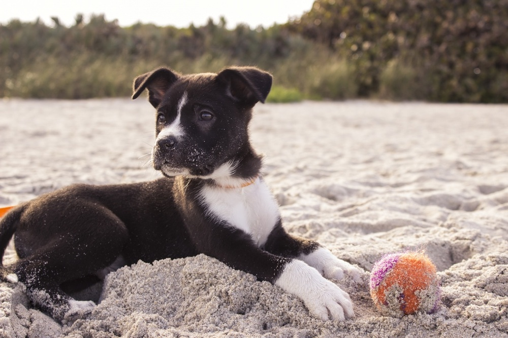 Cute Puppy on a beach