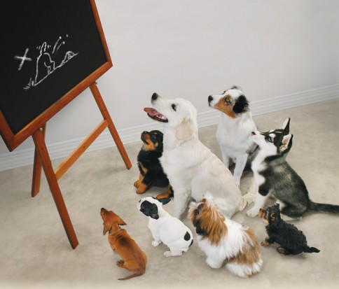 What A Puppy Class Shouldn't Be