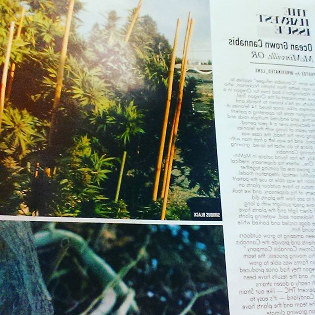 And check out our story on page 48 of the OR Leaf!