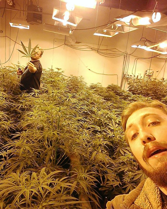 Hello from the OGCC grow! Check out the size of that twisted violet leaf!