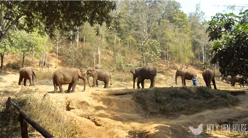 elephant1--watermark