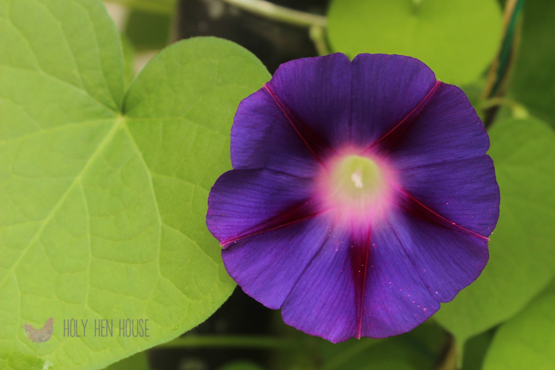 Morning_Glories_2