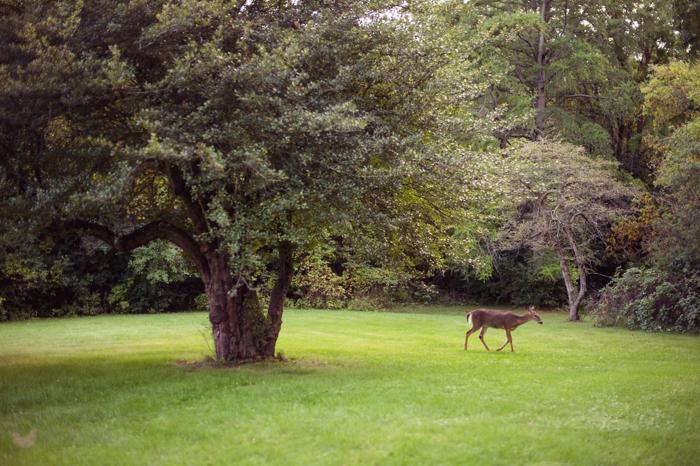 HHH-deer-1001