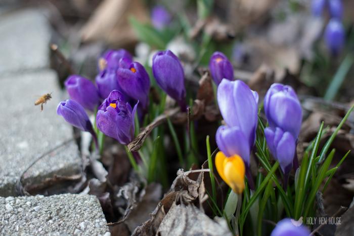 freshframe-spring2015-101