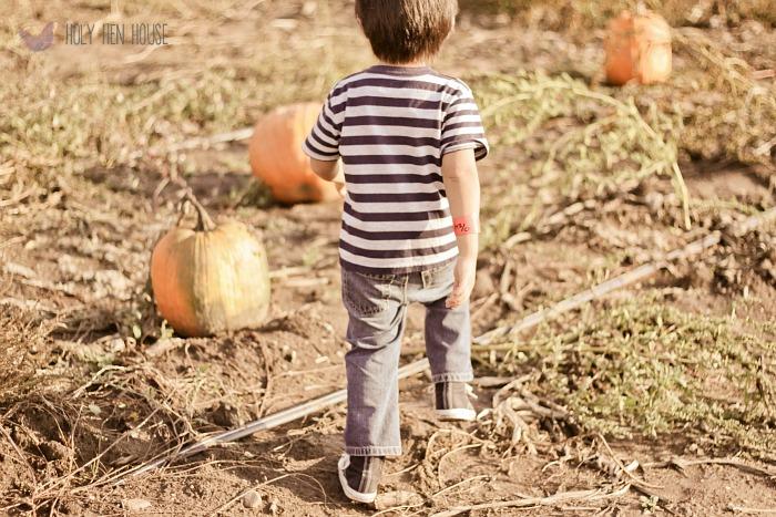 fall farm hhh 3
