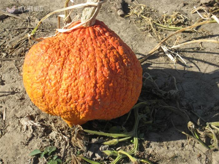 ugly pumpkin2