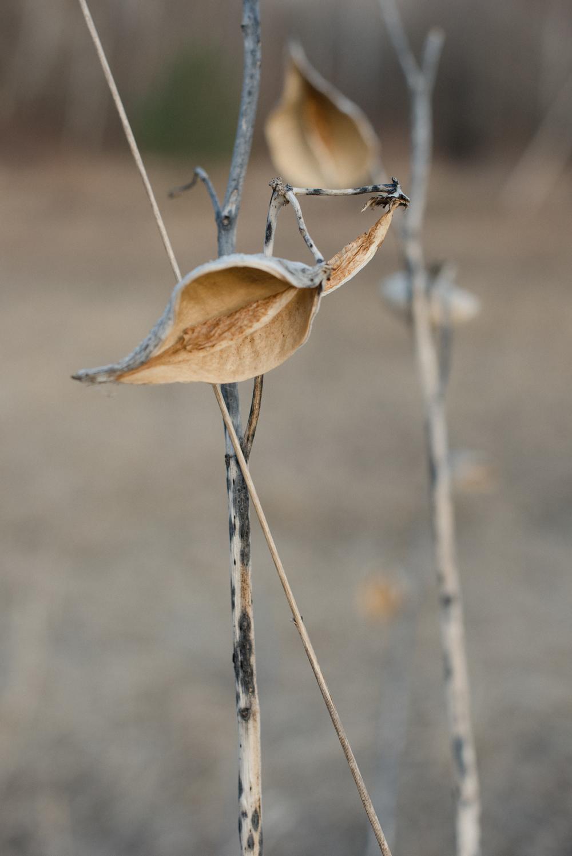 freshframe.seedpod.jpg