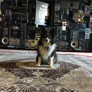 milo-the-dog.jpeg