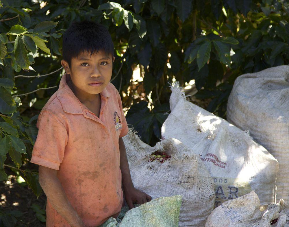 Guaymi Coffee Picker - Age: 11