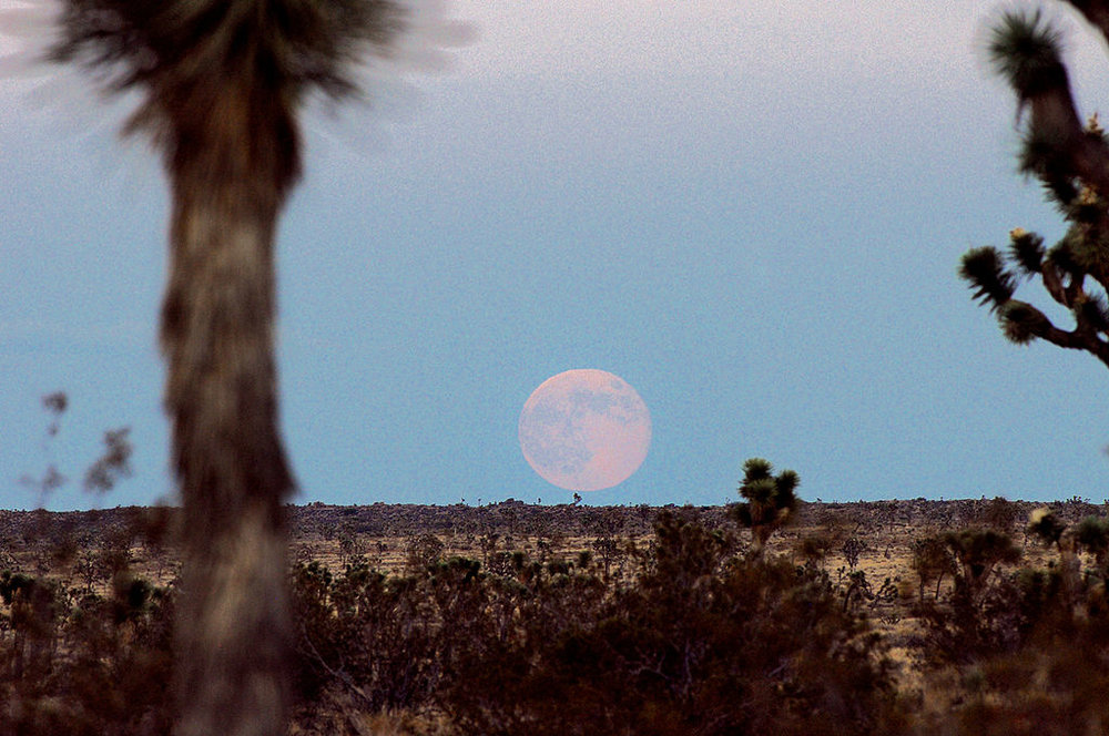 A Supermoon over Queen Valley at Joshua Tree National Park, Ca; photo by NPS/Brad Sutton