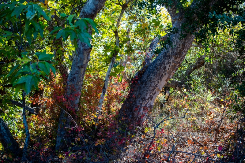 Autumn in the elfin forest; photo by Chad Woodward, 2018.
