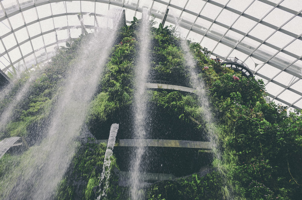 cloud forest, singapore - www.derrive.com