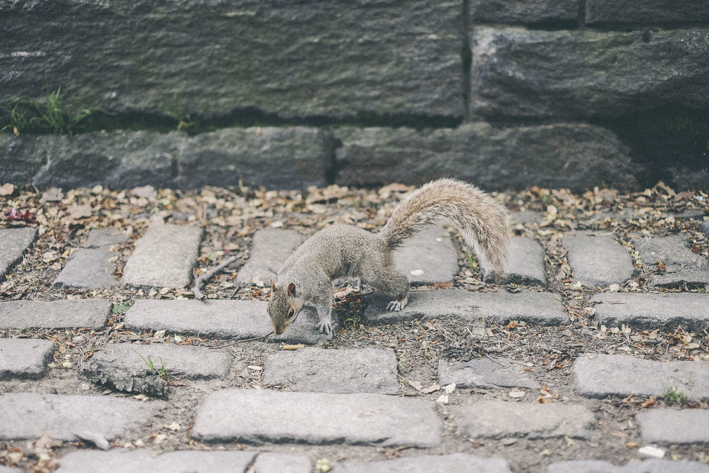 dérrive travel - BROOKLYN, new york squirrel #dumbo #newyork #nyc #brooklyn