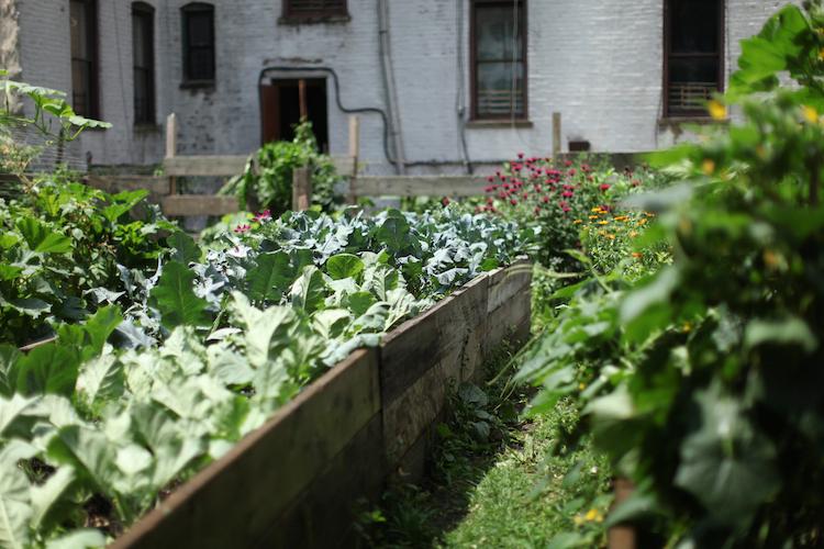 462 halsey community farm - Halsey Garden