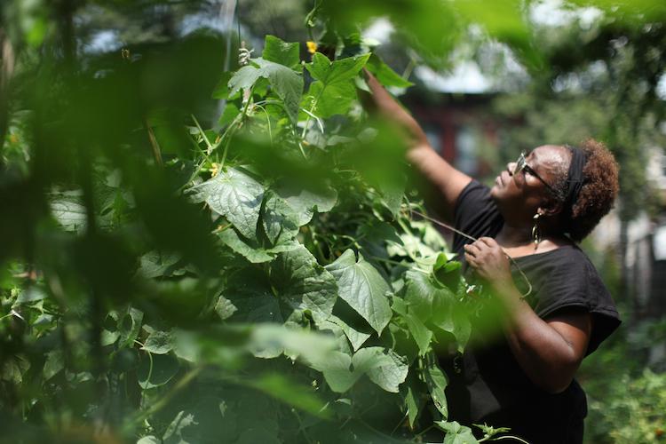 how does your garden grow 462 halsey community farm - Halsey Garden