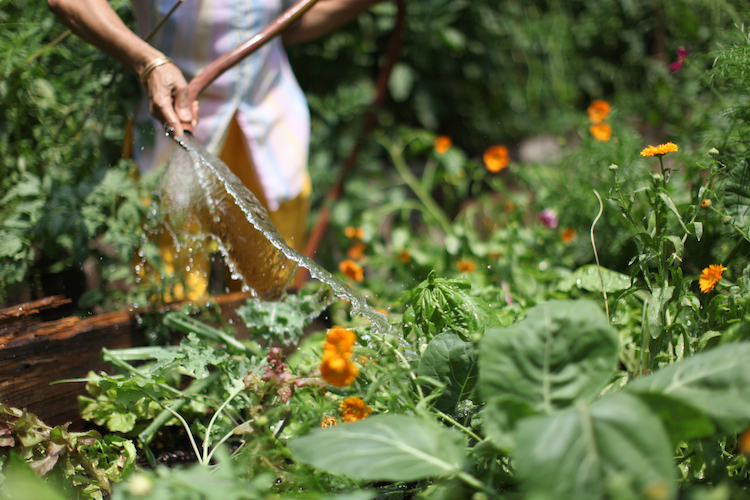 462 halsey community garden is open to members year round and to the general public from april 1st to october 31st unless otherwise specified for projects - Halsey Garden