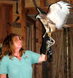 Brenda & Iffy the red tailed hawk