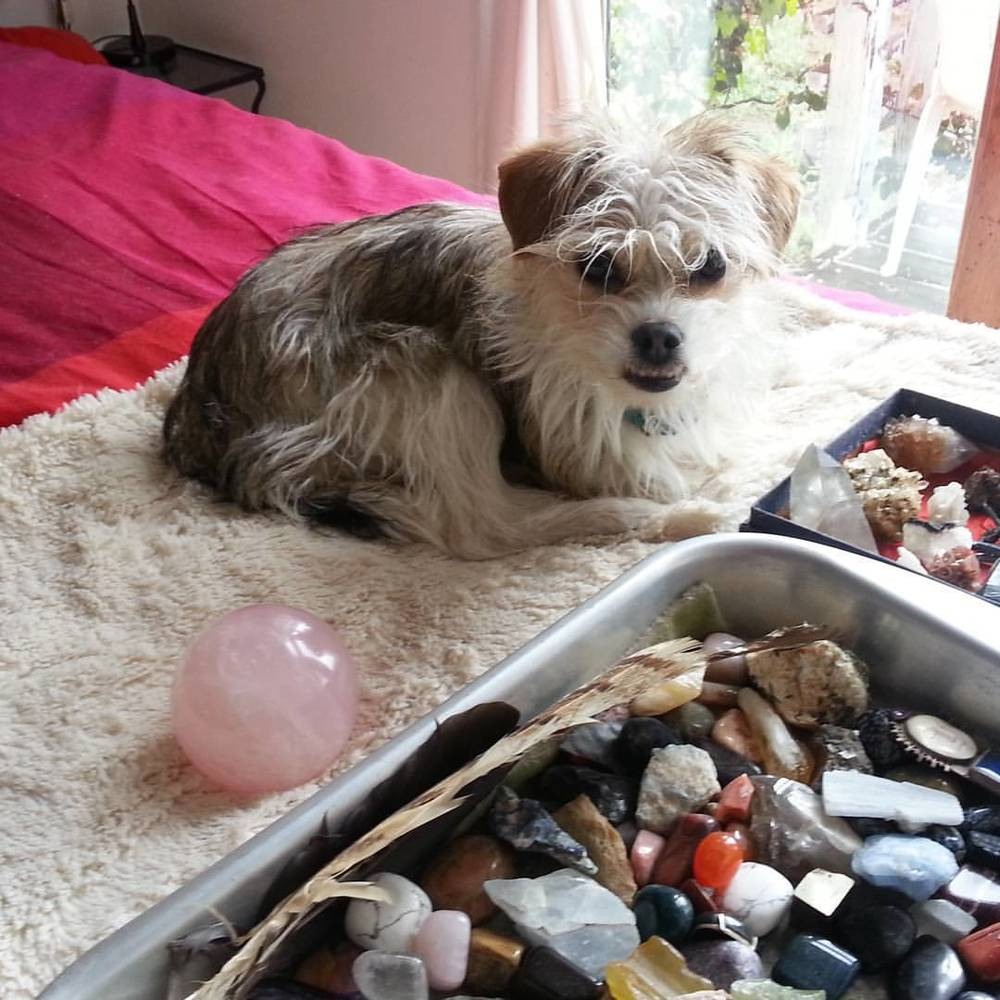 My little helper surrounded my New Moon crystal energy