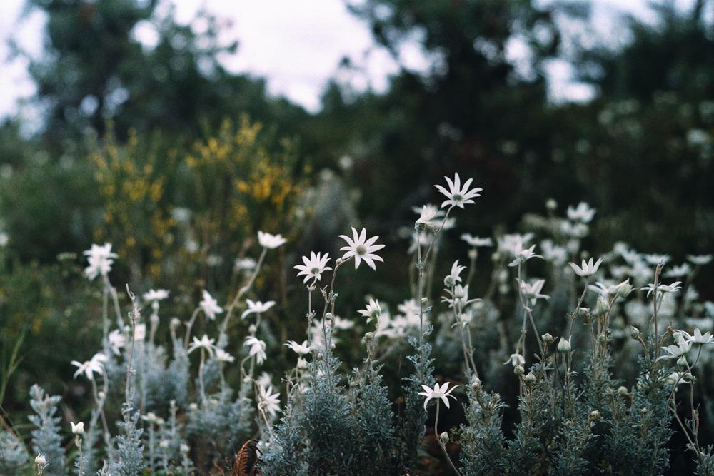 hannahpuechmarin-yuryagir-wildflowers-5.jpg