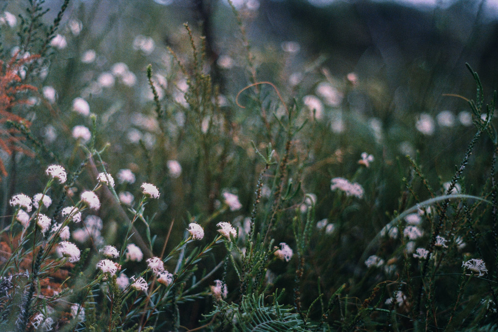 hannahpuechmarin-yuryagir-wildflowers-10.jpg