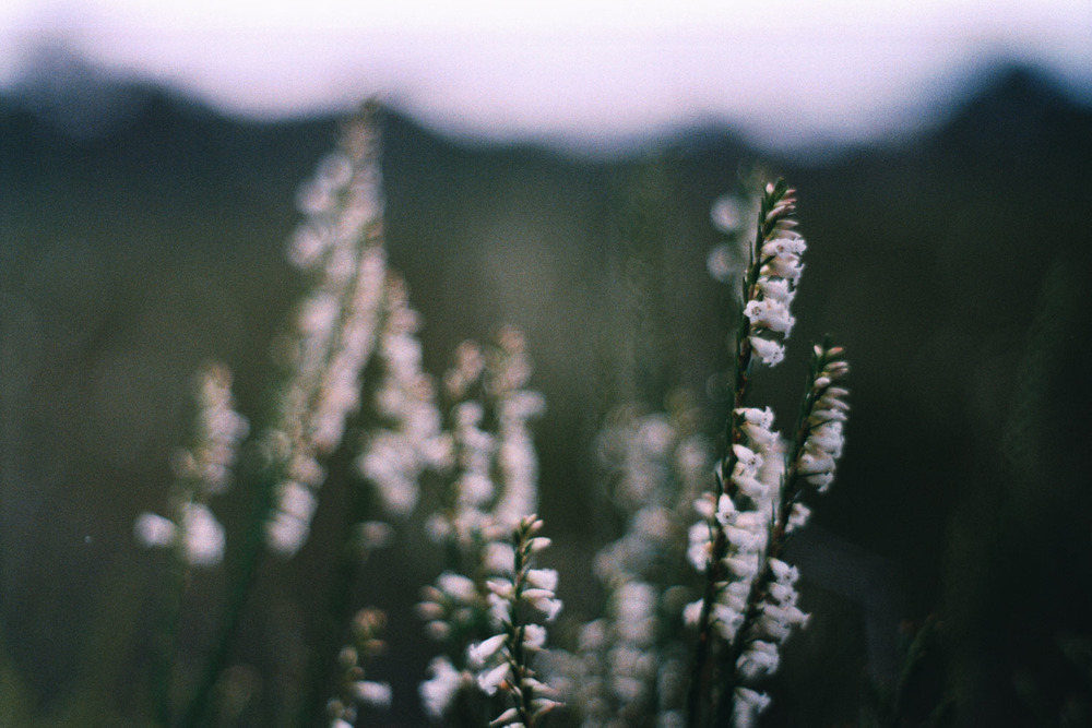 hannahpuechmarin-yuryagir-wildflowers-12.jpg