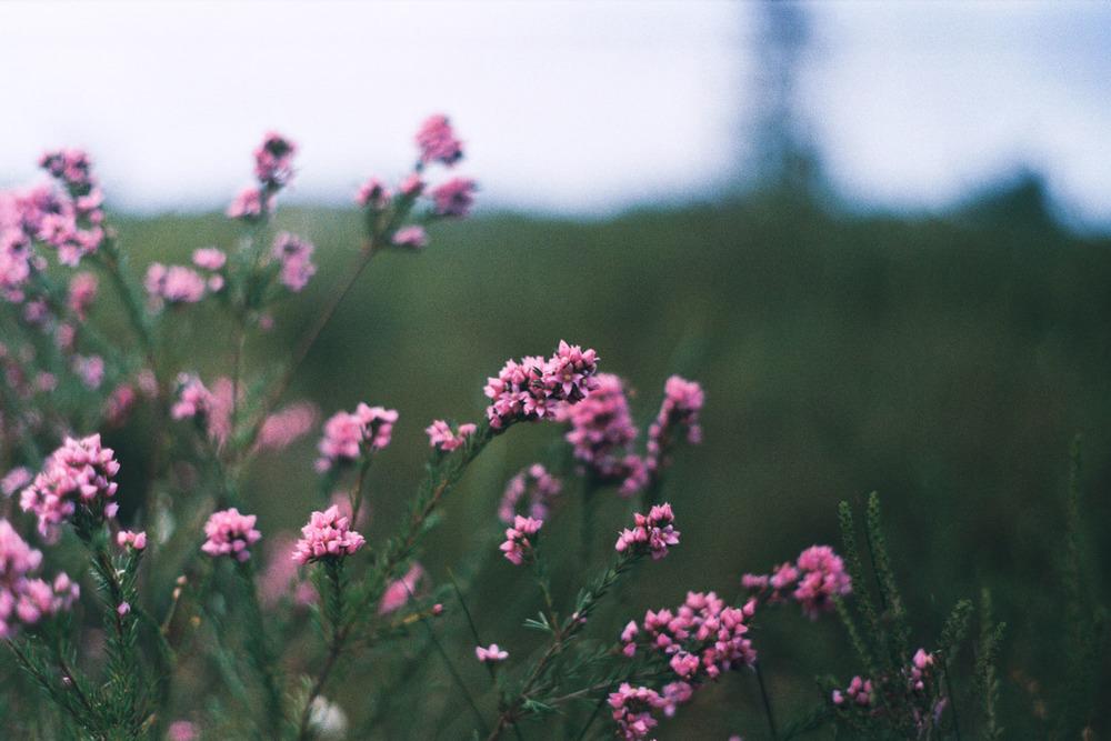 hannahpuechmarin-yuryagir-wildflowers-13.jpg