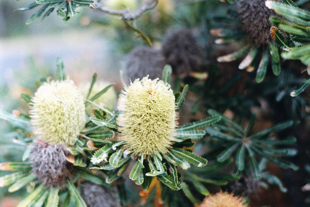 hannahpuechmarin-yuryagir-wildflowers-16.jpg