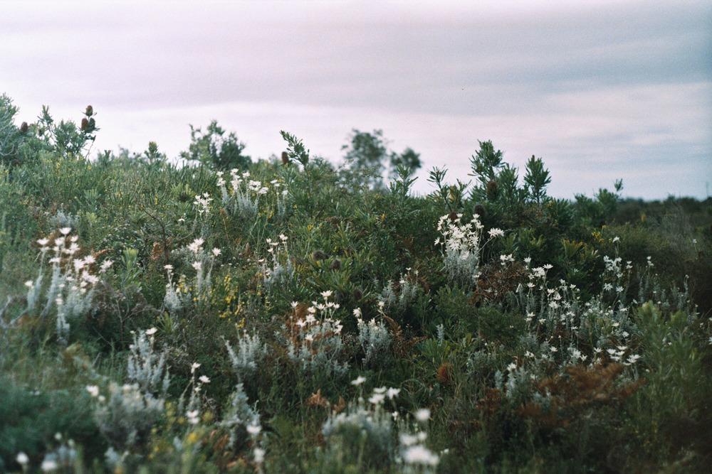 hannahpuechmarin-yuryagir-wildflowers-18.jpg