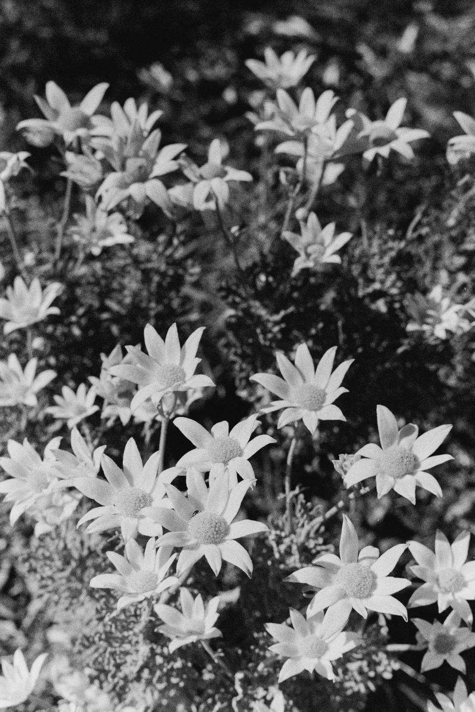 hannahpuechmarin-yuryagir-wildflowers-20.jpg