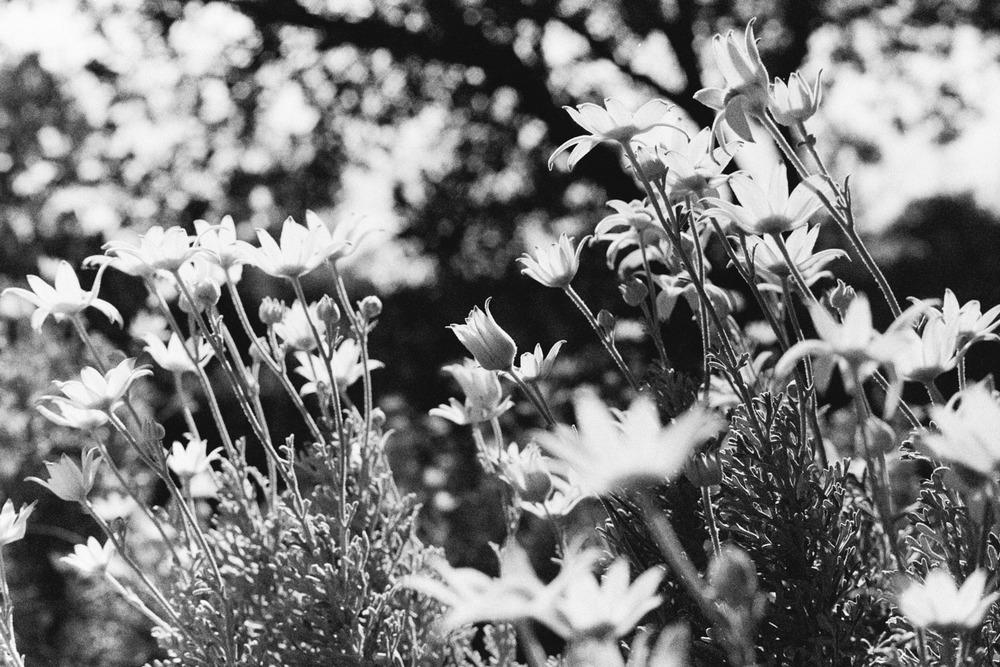 hannahpuechmarin-yuryagir-wildflowers-21.jpg