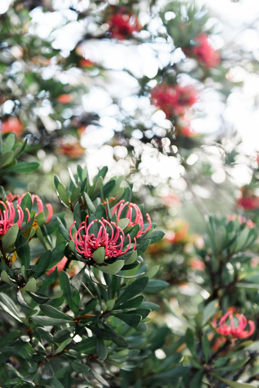 WEB-hannah puechmarin-tasmania photographer-9461.jpg