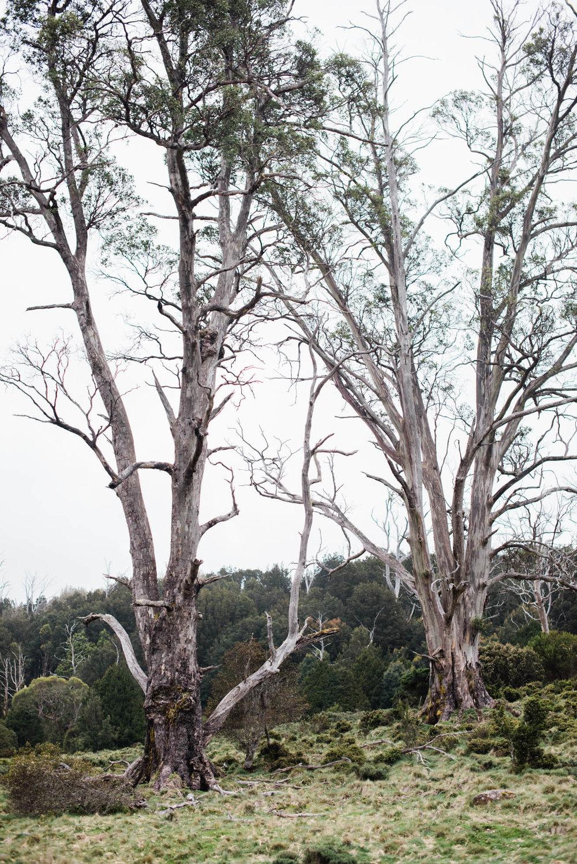 WEB-hannah puechmarin-tasmania photographer-9204.jpg