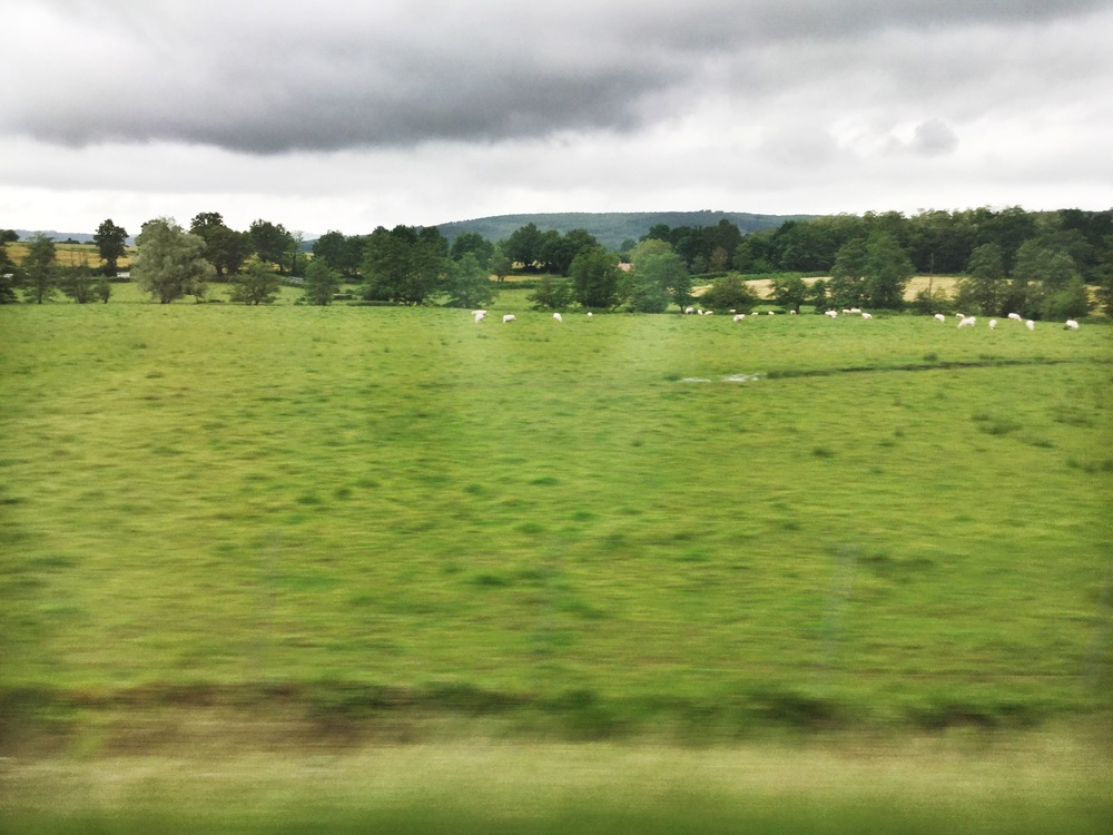 One of the many pastures we passed