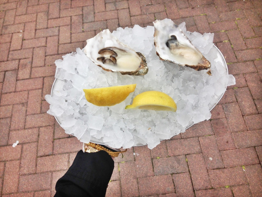 Fresh oysters in Oban