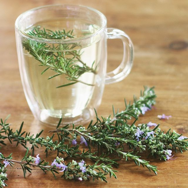 "Need a burst of energy and focus?💥Forget fancy nootropics! How about sipping a simple cup of rosemary infusion as your late afternoon pick-me-up? A quick whiff of rosemary essential oil uplifts my mood and turns my brain on, helping me to motivate to get work done and stay on task, crossing things off my to-do list with greater speed, but if you don't have a bottle handy, making a quick tea with a few sprigs of rosemary is effective and so easy, especially if you have your own bush! • Long ago, Shakespeare wrote ""There's rosemary for remembrance."" Indeed, this common herb has been used to improve concentration, slow the progression of cognition-related disorders, and improve performance on memory-related tasks. It can also cure headaches! Plus, it's got a lot of antioxidant and anti-inflammatory compounds. • If you drink the tea, the effective compounds do have to get through your digestive system and possibly might not be as effective, though I know many who swear on the ""nootropic"" effects of adding some cut up needles to their morning coffee, so I tried a simple tea and definitely have been enjoying the effects! Works for me! Maybe give it a try yourself and see  how you feel? • You can also just inhale rosemary fresh crushed needles for increased energy and focus or take a few deep breaths smelling straight from a bottle of essential oil or an essential oil diffuser. Inhaling allows you to absorb compounds through the lungs directly into the bloodstream, which then swiftly affects the brain. Rosemary essential oil is delightful, woodsy and really uplifting. Highly recommend giving the tea and/or oil a try! • #tea #teatime #afternoontea #ritual"