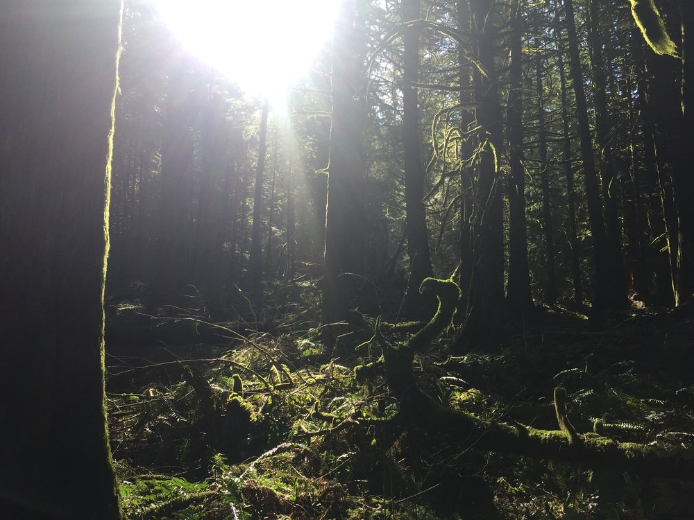 Chilliwack Community Forest_11.JPG