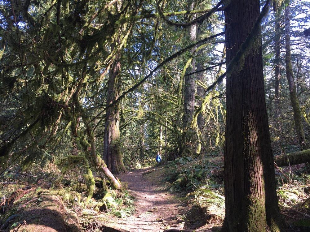 Chilliwack Community Forest_12.JPG